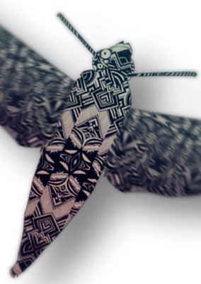 ZS moth
